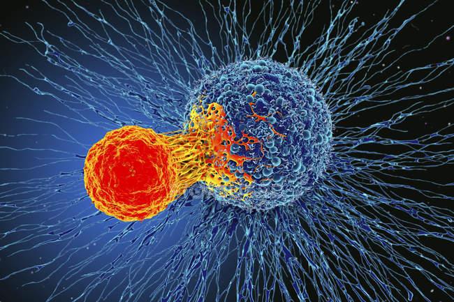 Nuovi scenari terapeutici nel trattamento dei linfomi cutanei a cellule T