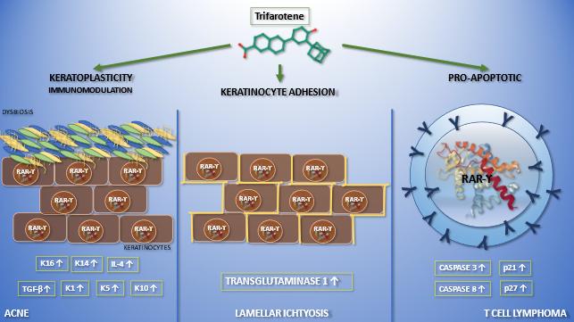 Trifarotene: il primo retinoide di quarta generazione in pratica clinica
